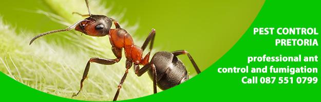 ant fumigation.jpg