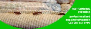 bed bug control pretoria.jpg