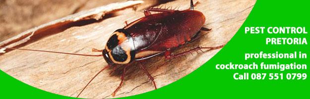 cockroach control services.jpg
