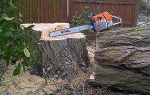 tree-felling3.jpg