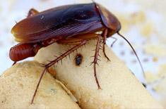 cockroaches thumb.jpg