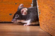 rodents thumb.jpg