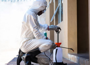 reliable pest control in capetown.jpg